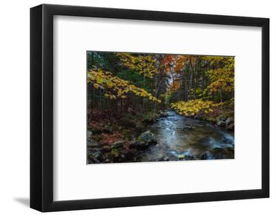 Take Me To The River, Autumn Maine Acadia National Park-Vincent James-Framed Photographic Print