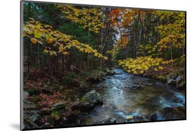 Take Me To The River, Autumn Maine Acadia National Park-Vincent James-Mounted Photographic Print