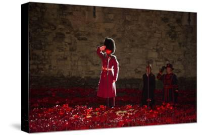 A soldier salutes in the midst of poppies at the Tower of London-Associated Newspapers-Stretched Canvas Print