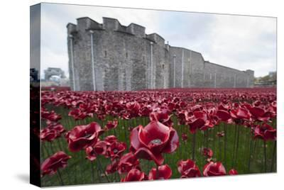 Ceramic poppies at the Tower of London-Associated Newspapers-Stretched Canvas Print