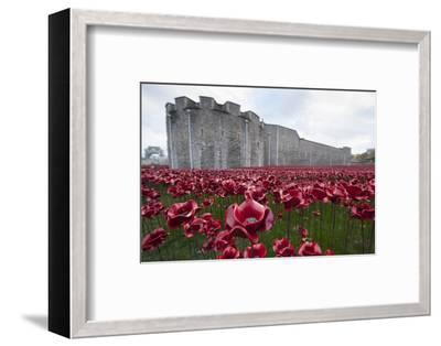 Ceramic poppies at the Tower of London-Associated Newspapers-Framed Photo