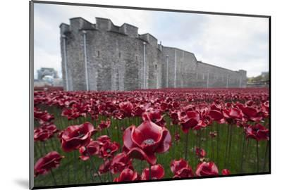 Ceramic poppies at the Tower of London-Associated Newspapers-Mounted Photo
