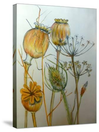Dried seedheads-Sarah Thompson-Engels-Stretched Canvas Print
