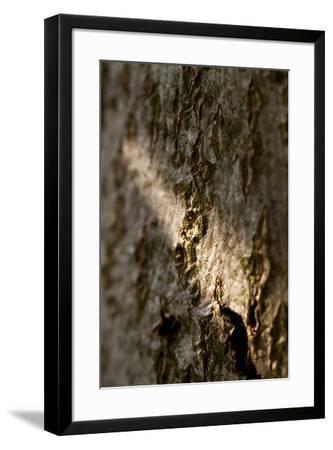 Bark-K.B. White-Framed Photographic Print