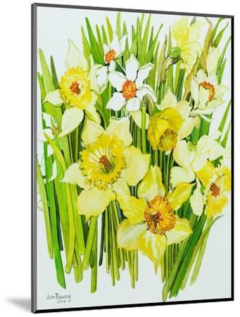 Daffodils and narcissus-Joan Thewsey-Mounted Giclee Print