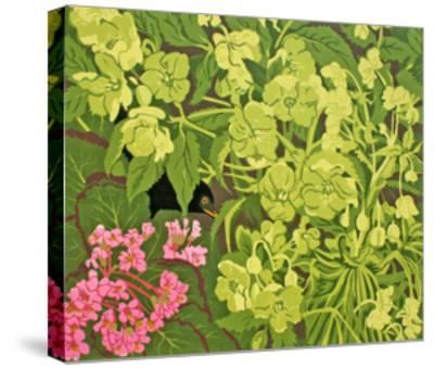 Blackbird in the Hellebores-Carol Walklin-Stretched Canvas Print