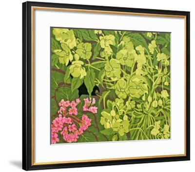 Blackbird in the Hellebores-Carol Walklin-Framed Giclee Print