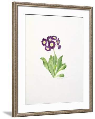 Auricula-Sally Crosthwaite-Framed Giclee Print