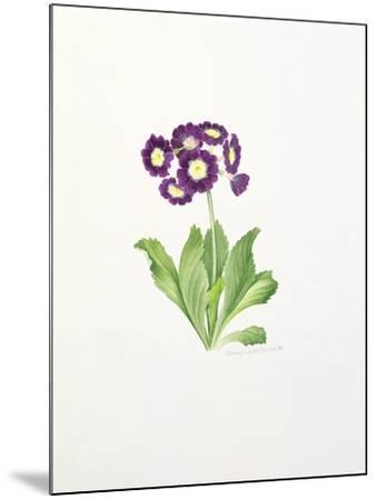 Auricula-Sally Crosthwaite-Mounted Giclee Print