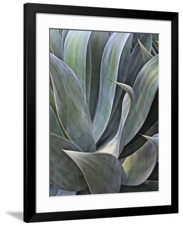 Faded Succulant Detail, 2017--Framed Photographic Print