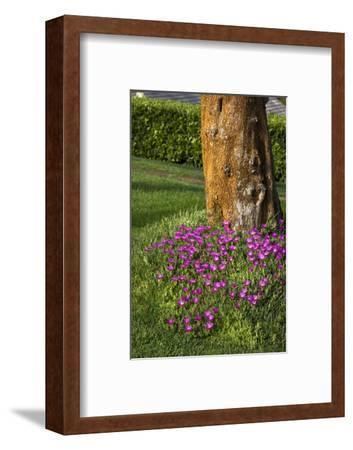 Pink flowers around a tree-Adriano Bacchella-Framed Photo