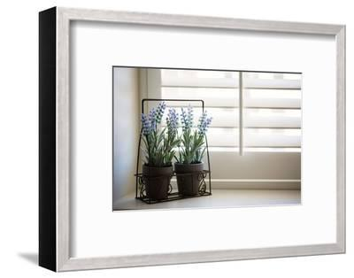 Wire planter holding pots of lavender-Mark Lord-Framed Photo