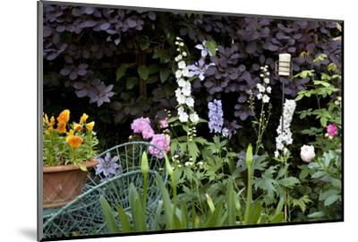 Flowers in a garden-Richard Bryant-Mounted Photo