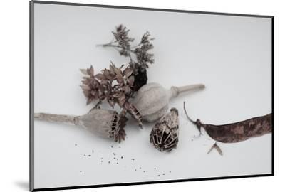 Fleurs de pavot séchées.-Angela Marsh-Mounted Photographic Print