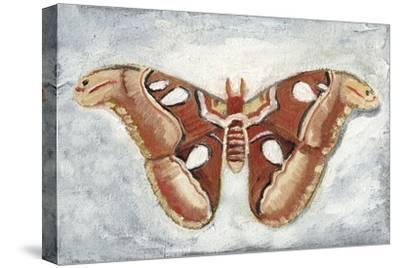 Papillon de Nuit I-Alicia Ludwig-Stretched Canvas Print