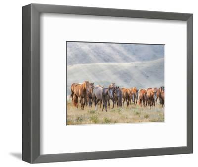 Sunkissed Horses III-PHBurchett-Framed Art Print
