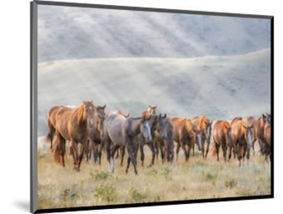 Sunkissed Horses III-PHBurchett-Mounted Art Print