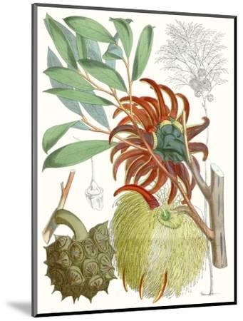 Tropical Variety IV-Curtis-Mounted Art Print