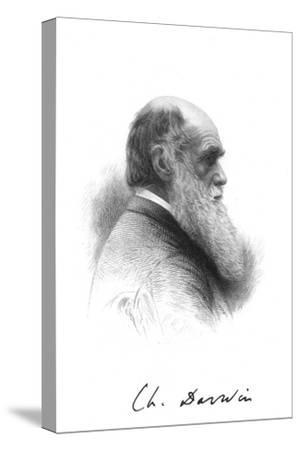 Charles Darwin, English naturalist, c1880. Artist: Unknown-Unknown-Stretched Canvas Print