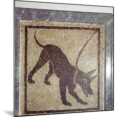 Roman mosaic of dog, Cave Canem, Pompeii, Italy. Artist: Unknown-Unknown-Mounted Giclee Print