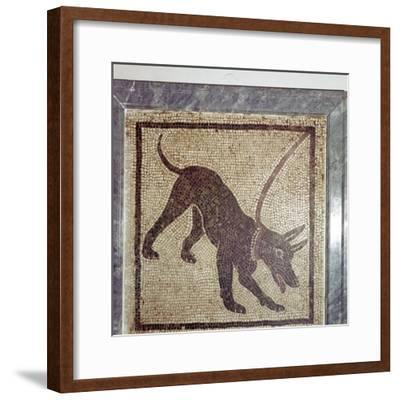 Roman mosaic of dog, Cave Canem, Pompeii, Italy. Artist: Unknown-Unknown-Framed Giclee Print