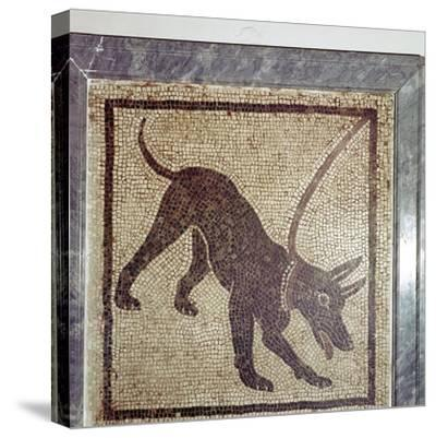 Roman mosaic of dog, Cave Canem, Pompeii, Italy. Artist: Unknown-Unknown-Stretched Canvas Print