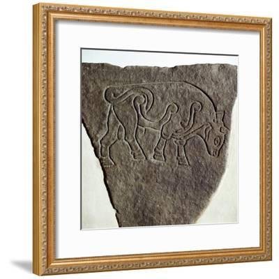Bull motif on Pictish incised stone, Burghead, Moray, Scotland, c6th - 7th century. Artist: Unknown-Unknown-Framed Giclee Print