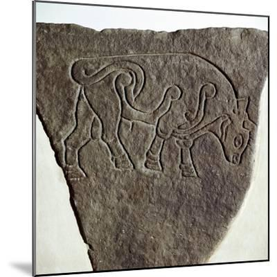 Bull motif on Pictish incised stone, Burghead, Moray, Scotland, c6th - 7th century. Artist: Unknown-Unknown-Mounted Giclee Print