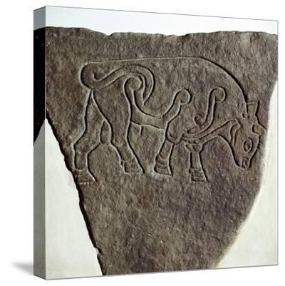 Bull motif on Pictish incised stone, Burghead, Moray, Scotland, c6th - 7th century. Artist: Unknown-Unknown-Stretched Canvas Print