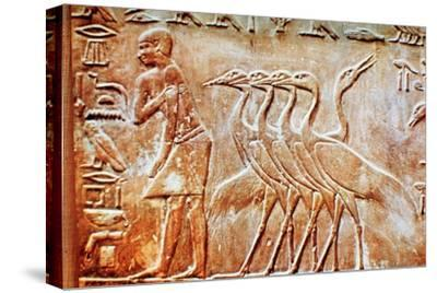 Geese, wall relief from the Tomb of Ptahhotep, Saqqara, Egypt, 24th century BC. Artist: Unknown-Unknown-Stretched Canvas Print