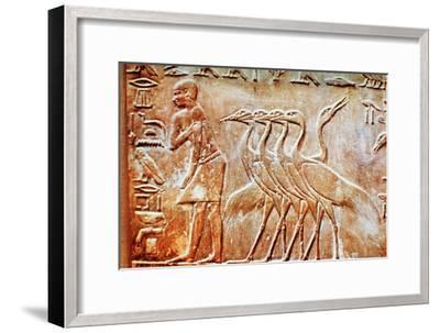 Geese, wall relief from the Tomb of Ptahhotep, Saqqara, Egypt, 24th century BC. Artist: Unknown-Unknown-Framed Giclee Print
