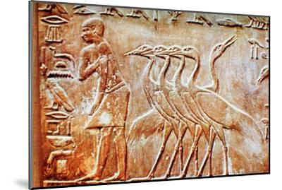 Geese, wall relief from the Tomb of Ptahhotep, Saqqara, Egypt, 24th century BC. Artist: Unknown-Unknown-Mounted Giclee Print
