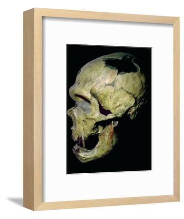 Neanderthal skull from France. Artist: Unknown-Unknown-Framed Photographic Print