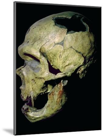 Neanderthal skull from France. Artist: Unknown-Unknown-Mounted Photographic Print