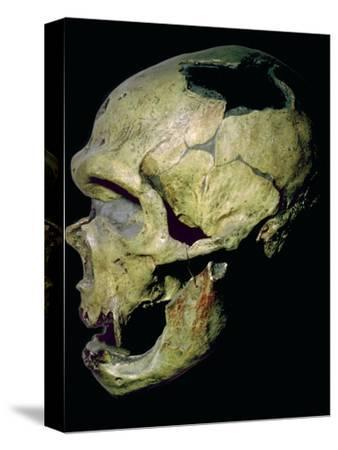 Neanderthal skull from France. Artist: Unknown-Unknown-Stretched Canvas Print
