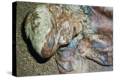 Lindow Man, found in a peat moss bog in Ireland, c2nd century BC. Artist: Unknown-Unknown-Stretched Canvas Print