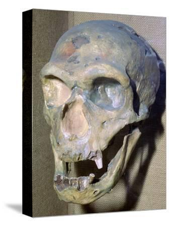 Reconstructed Neanderthal Man's skull, 49,000 BC. Artist: Unknown-Unknown-Stretched Canvas Print
