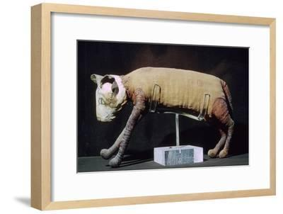 Egyptian mummy of a cat from the Louvre's collection. Artist: Unknown-Unknown-Framed Giclee Print