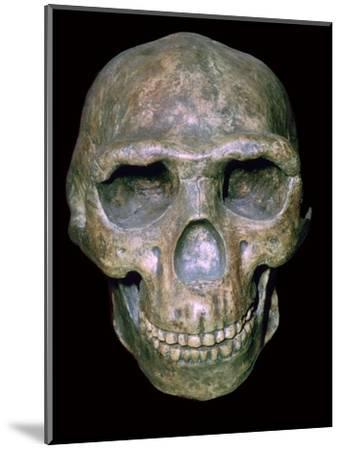 Skull of 'Peking' man (reconstruction). Artist: Unknown-Unknown-Mounted Photographic Print