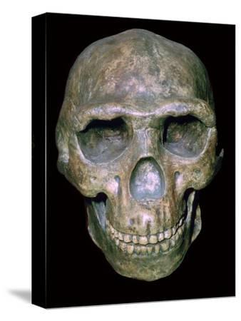 Skull of 'Peking' man (reconstruction). Artist: Unknown-Unknown-Stretched Canvas Print