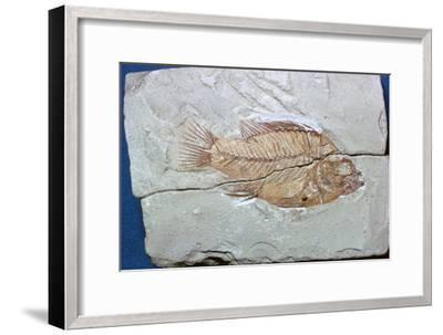 Fossil of a fish. Artist: Unknown-Unknown-Framed Giclee Print