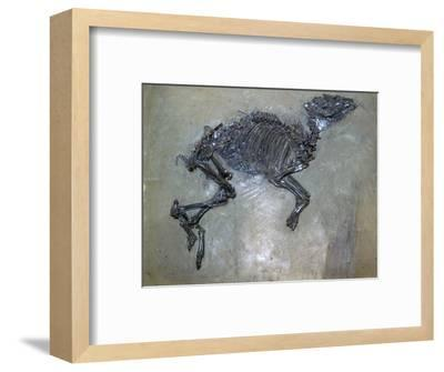 Fossil of a horse. Artist: Unknown-Unknown-Framed Giclee Print