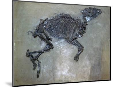 Fossil of a horse. Artist: Unknown-Unknown-Mounted Giclee Print