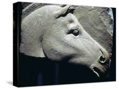 Egyptian relief of a horse's head. Artist: Unknown-Unknown-Stretched Canvas Print