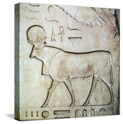 Egyptian relief of the bull-god Apis. Artist: Unknown-Unknown-Stretched Canvas Print