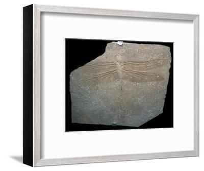 Jurrassic dragonfly fossil. Artist: Unknown-Unknown-Framed Giclee Print