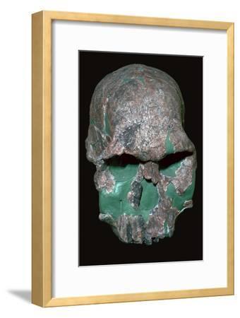 Skull of Homo Habilis. Artist: Unknown-Unknown-Framed Giclee Print