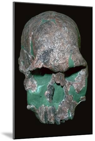 Skull of Homo Habilis. Artist: Unknown-Unknown-Mounted Giclee Print