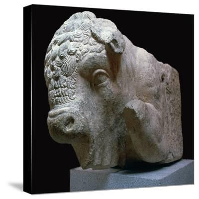 Bull's head Roman sculpture from the Municipal Forum in Merida, 1st century BC. Artist: Unknown-Unknown-Stretched Canvas Print