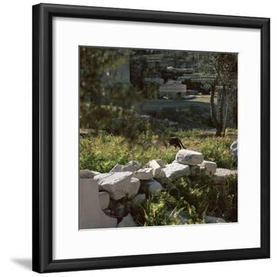 Picture of a cat in Athens. Artist: Unknown-Unknown-Framed Photographic Print